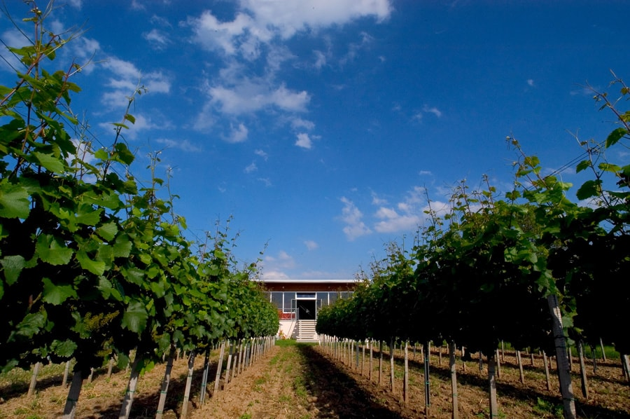 Weingut für den Weinkeller Berlin: im Ladengeschäft und im Online Shop